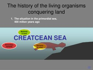 The history of the living organisms conquering land