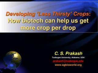 Developing 'Less Thirsty' Crops : How biotech can help us get more crop per drop