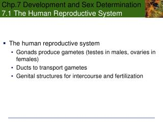 Chp.7 Development and Sex Determination 7.1 The Human Reproductive System