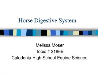 Horse Digestive System