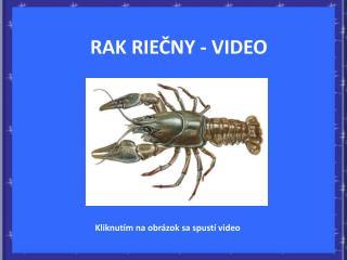 RAK RIEČNY - VIDEO