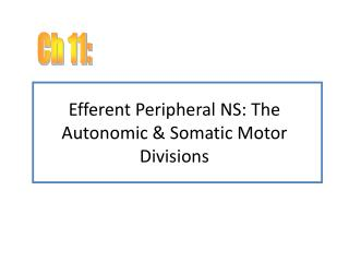 Efferent Peripheral NS: The Autonomic & Somatic Motor Divisions