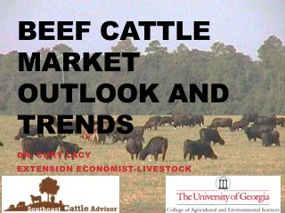 Beef Cattle Market Outlook and Trends