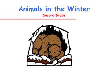 Animals in the Winter Second Grade