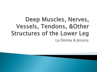 Deep Muscles, Nerves, Vessels, Tendons, &Other Structures of the Lower Leg