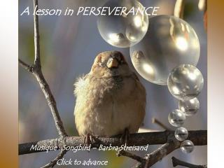 A lesson in PERSEVERANCE