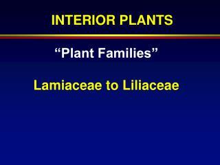"""""""Plant Families"""" Lamiaceae to Liliaceae"""