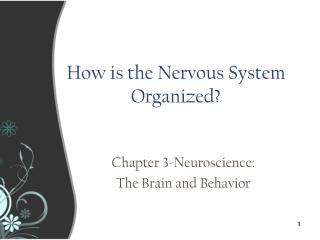 How is the Nervous System Organized?