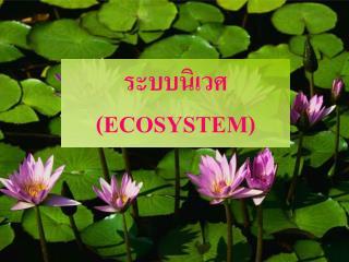 ระบบนิเวศ ( ECOSYSTEM)