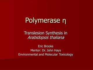 Polymerase η