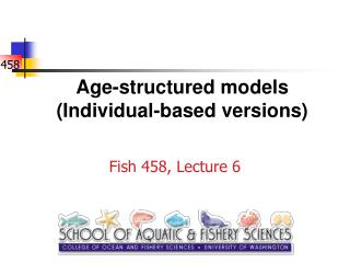 Age-structured models (Individual-based versions)