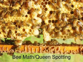 Bee Math/Queen Spotting