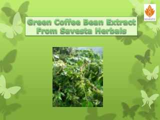 Green Coffee Bean Extract From Savesta Herbals