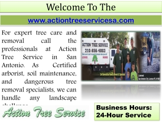 Tree Care In San Antonio - Stump Grinding - Commercial Tree