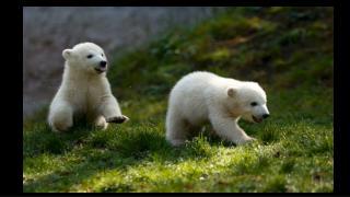 Spring Babies 2014