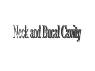 neck and bucal cavity
