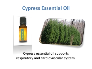 Get Cypress Essential Oil at doTERRA