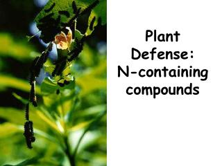Plant Defense:  N-containing compounds