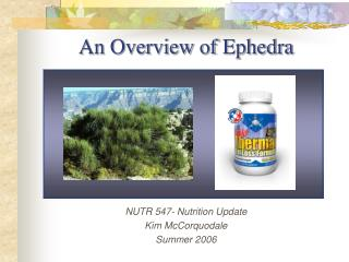 An Overview of Ephedra