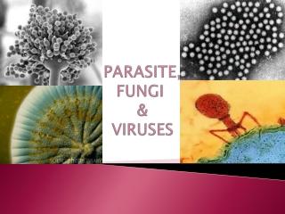 PARASITE, FUNGI & VIRUSES