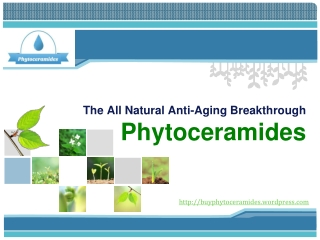 Naturally Reverse the Effects of Aging with Phytoceramides