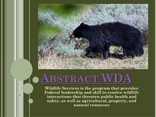 Abstract WDA