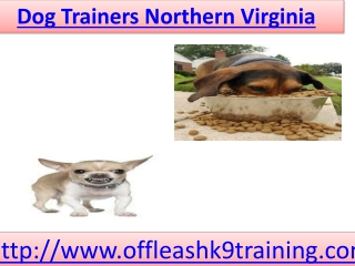 Northern Virginia Dog Trainers