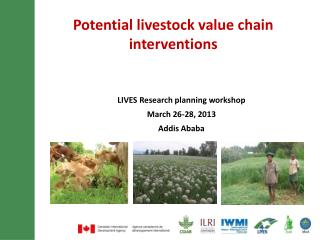 Potential livestock value chain interventions