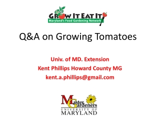 Q&A on Growing Tomatoes