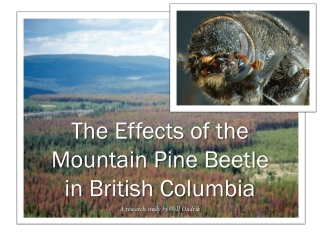 The Effects of the Mountain Pine Beetle  in British Columbia