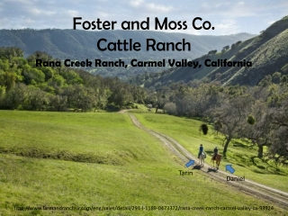 Foster and Moss Co. Cattle Ranch