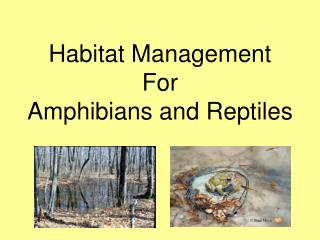 Habitat Management For  Amphibians and Reptiles