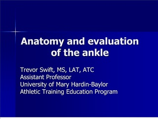 anatomy and evaluation of the ankle