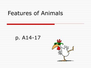 Features of Animals