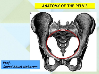 muscles of the pelvic floor pelvic diaphragm