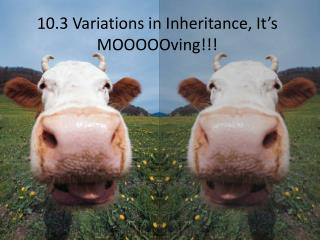 10.3 Variations in Inheritance, It's  MOOOOOving !!!