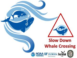 Slow Down Whale  Crossing