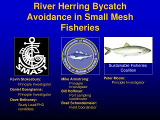 River Herring Bycatch Avoidance in Small Mesh Fisheries