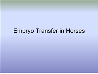 embryo transfer in horses
