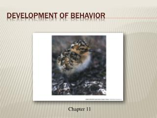 Development of Behavior