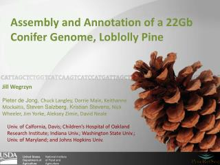 Assembly and Annotation of a 22Gb  C onifer  G enome, Loblolly Pine