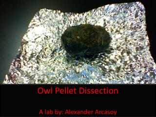 Owl Pellet Dissection A lab by: Alexander Arcasoy
