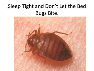 Sleep Tight and Don't Let the Bed Bugs Bite.