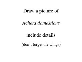 Draw a picture of Acheta domesticus include details