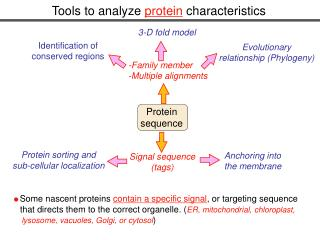 Tools to analyze  protein  characteristics