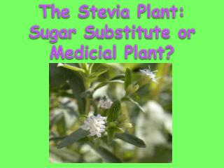 The  Stevia  Plant: Sugar Substitute or  Medicial  Plant?