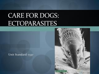 Care for Dogs:  Ectoparasites