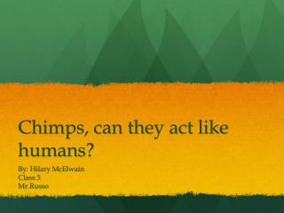 Chimps, can they act like humans?