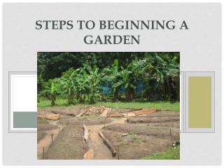 Steps to Beginning  a Garden