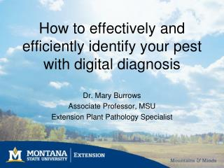 How to effectively and efficiently identify your pest  with  digital diagnosis